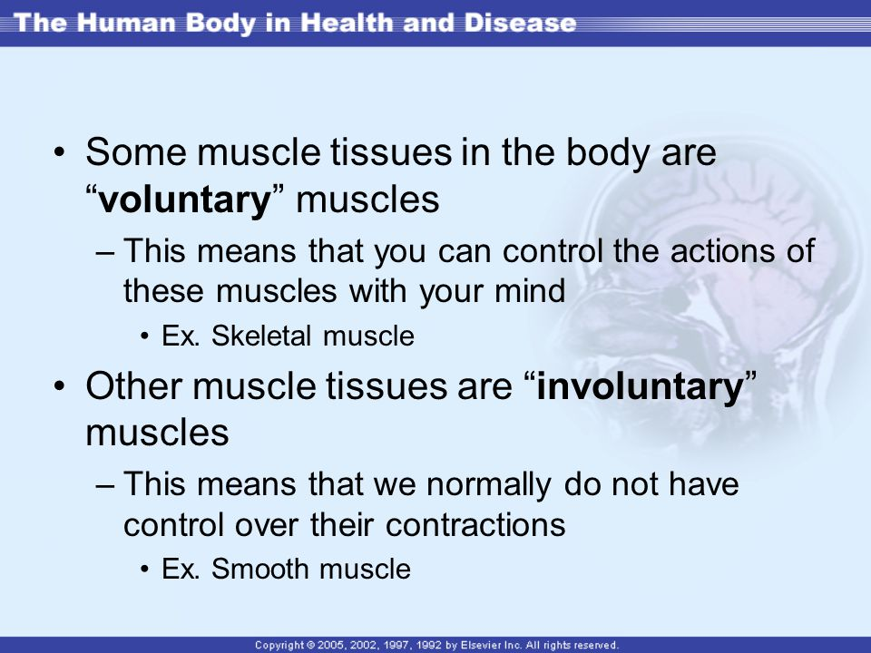 Some muscle tissues in the body are voluntary muscles –This means that you can control the actions of these muscles with your mind Ex.