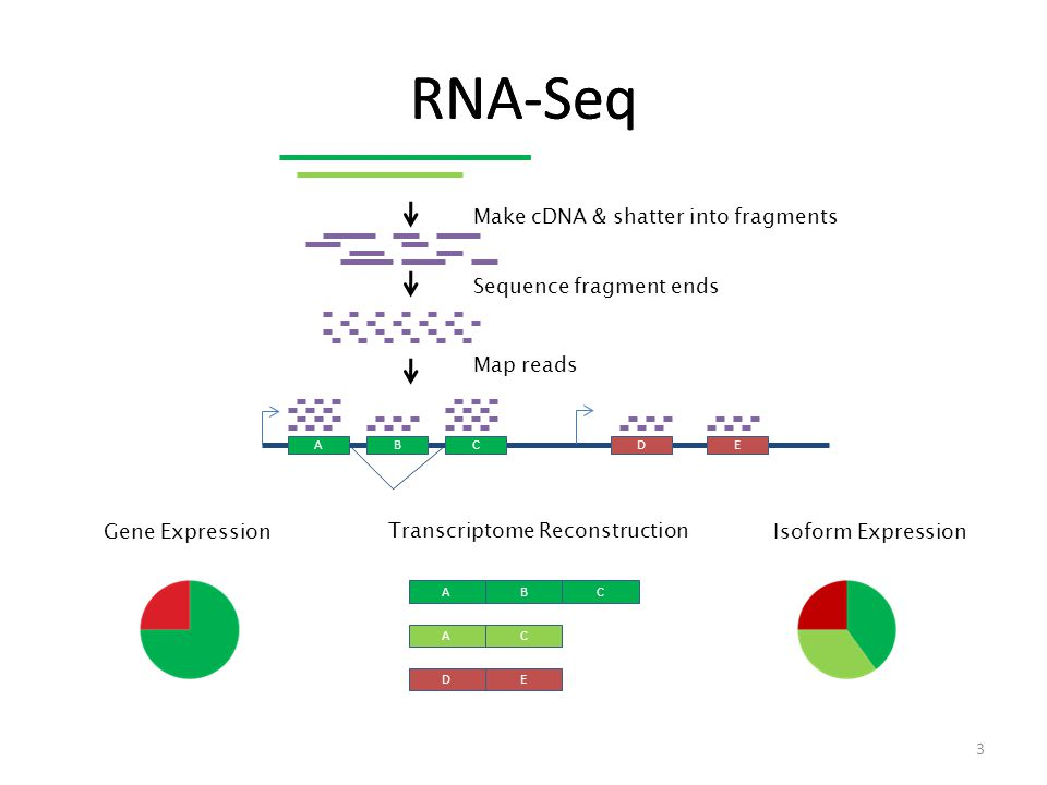 RNA-Seq ABCDE Make cDNA & shatter into fragments Sequence fragment ends Map reads Gene Expression ABC AC DE Transcriptome Reconstruction Isoform Expression 3