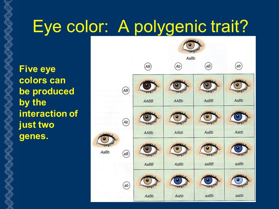 Eye Color Predictor Calculator Jidimakeup