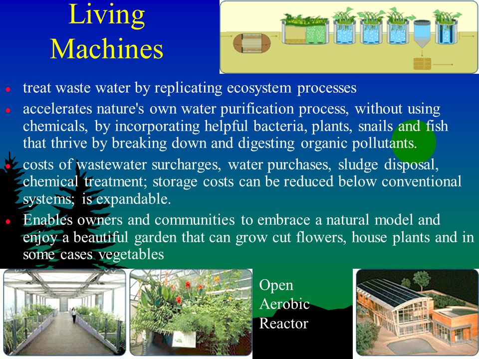 Living Machines l treat waste water by replicating ecosystem processes l accelerates nature s own water purification process, without using chemicals, by incorporating helpful bacteria, plants, snails and fish that thrive by breaking down and digesting organic pollutants.