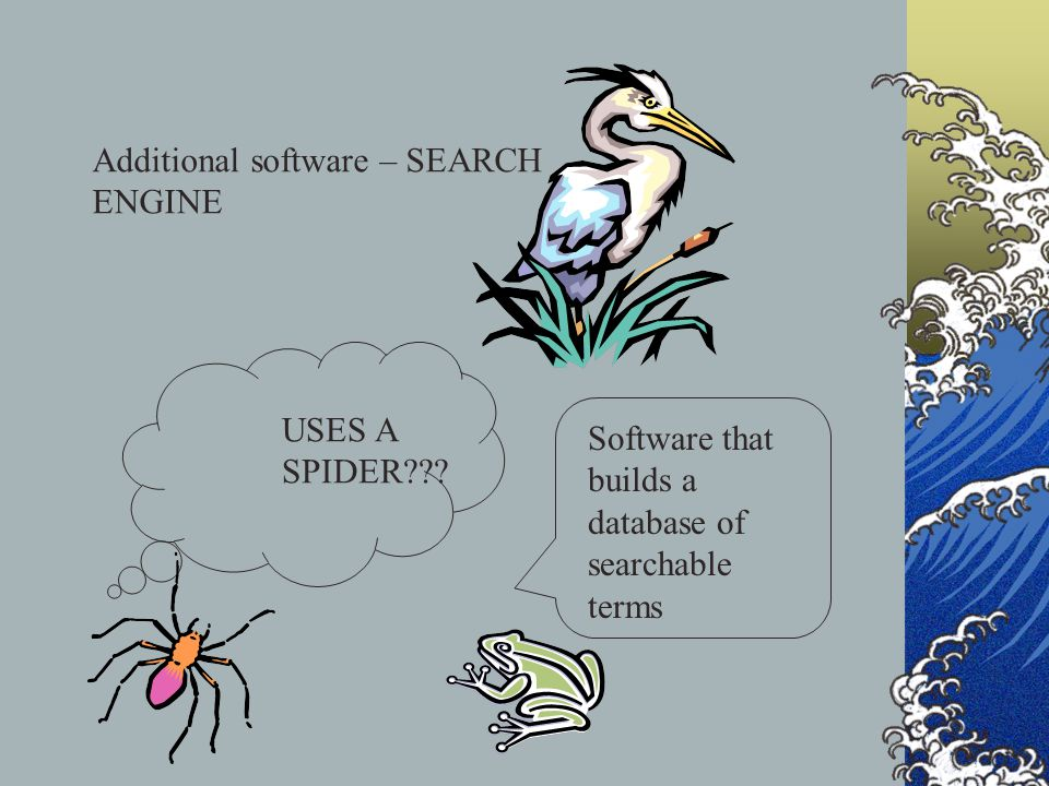 Additional software – SEARCH ENGINE Software that builds a database of searchable terms USES A SPIDER