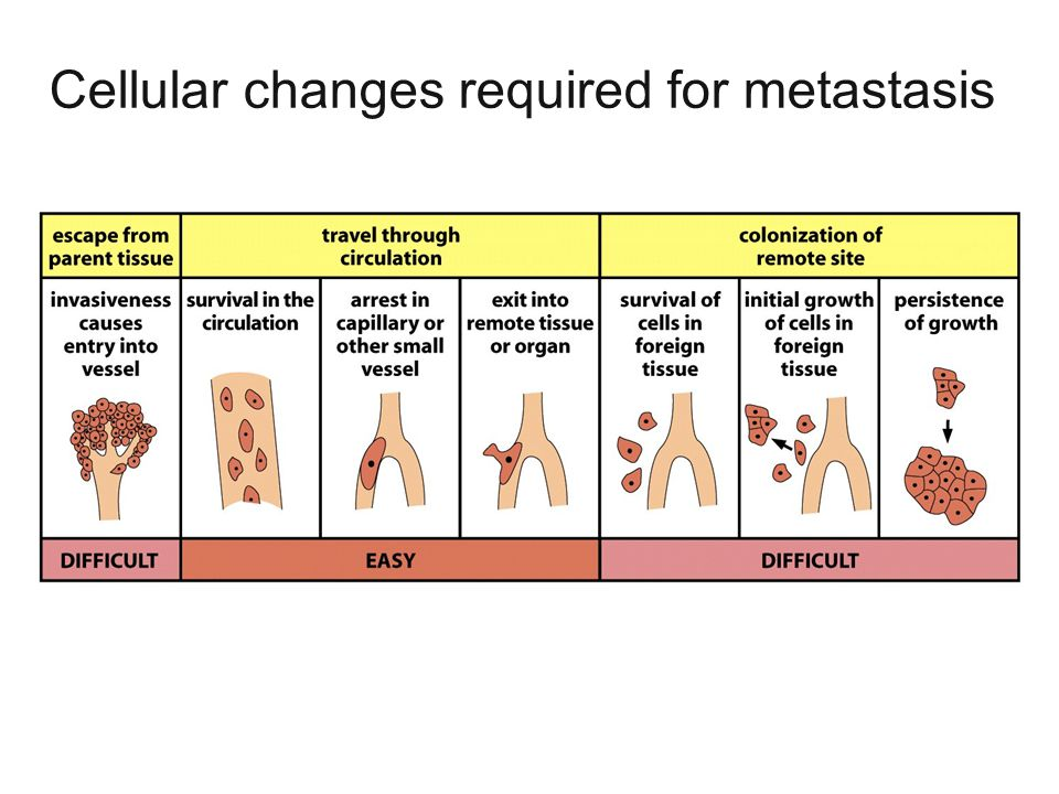 Cellular changes required for metastasis
