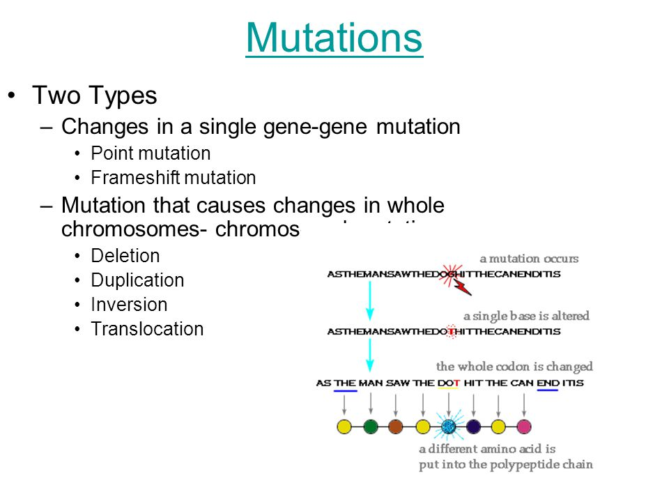 Genetics Continued. Mutations Two Types –Changes in a single gene ...