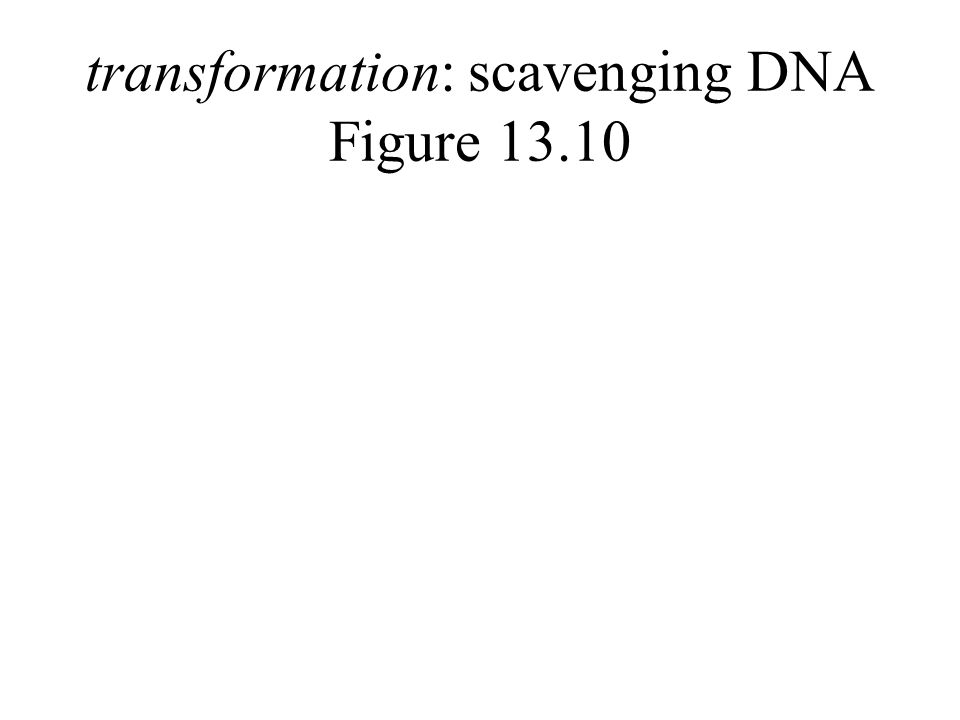 transformation: scavenging DNA Figure 13.10