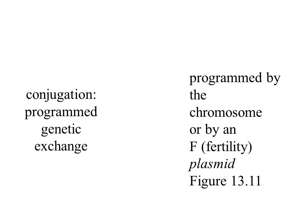 conjugation: programmed genetic exchange programmed by the chromosome or by an F (fertility) plasmid Figure 13.11