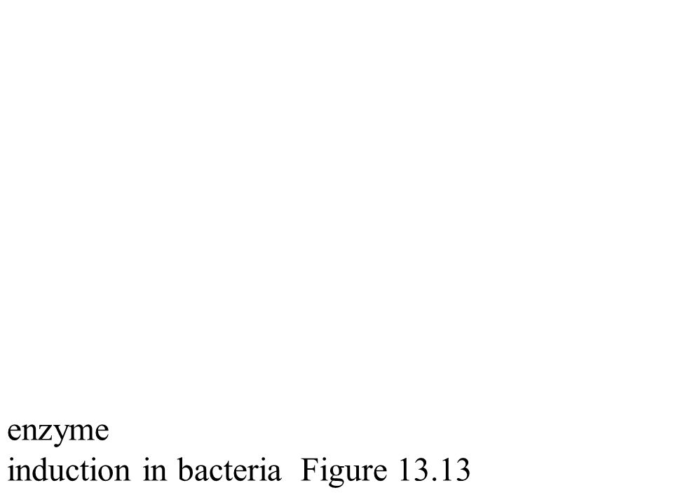 enzyme induction in bacteria Figure 13.13