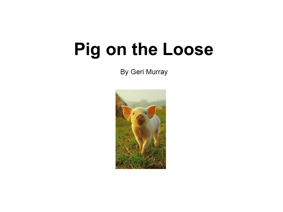 Pig on the Loose By Geri Murray