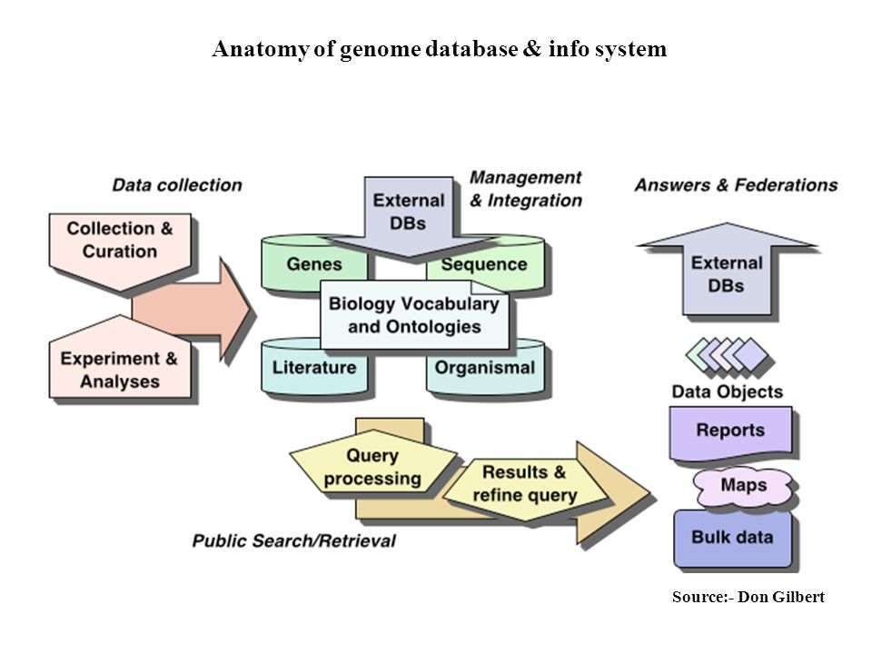 Anatomy of genome database & info system Source:- Don Gilbert
