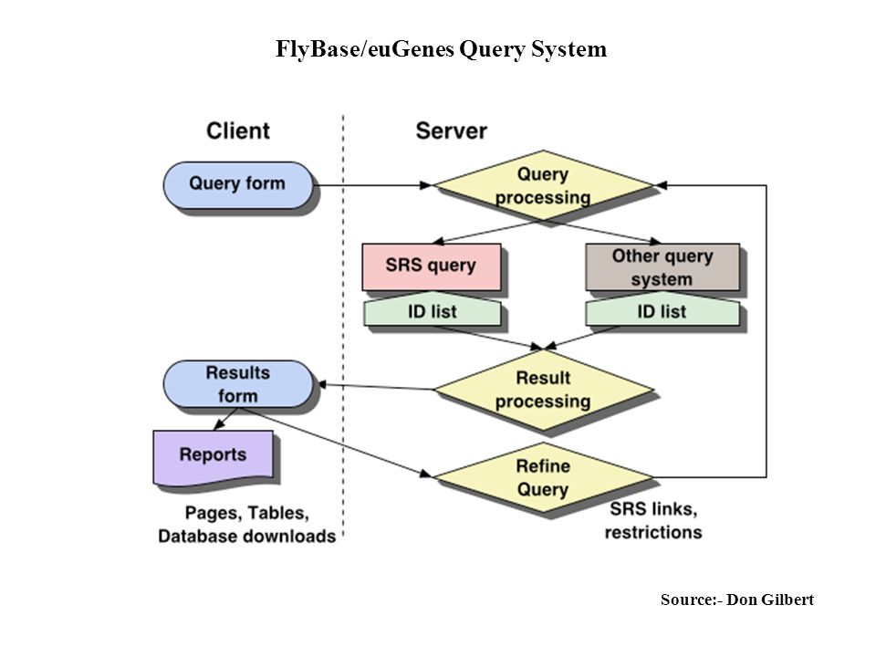 FlyBase/euGenes Query System Source:- Don Gilbert