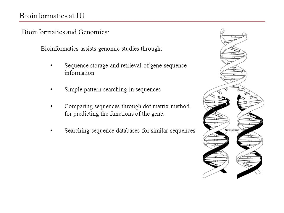Bioinformatics and Genomics: Bioinformatics assists genomic studies through: Sequence storage and retrieval of gene sequence information Simple pattern searching in sequences Comparing sequences through dot matrix method for predicting the functions of the gene.