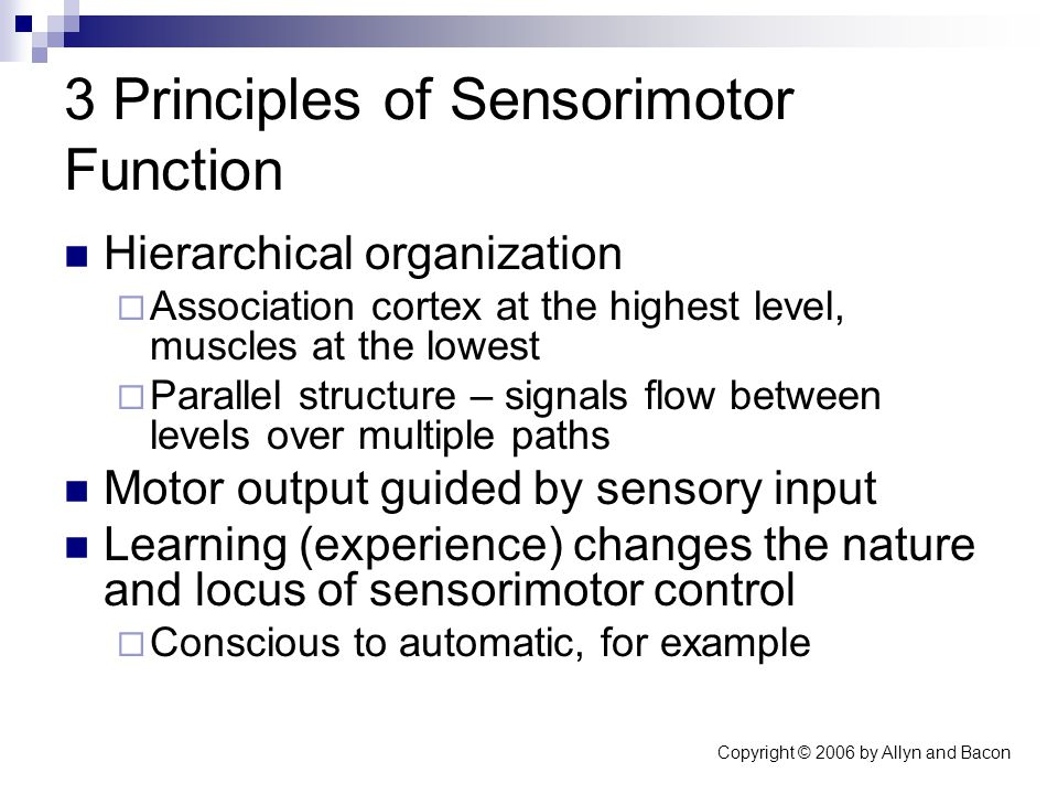 Copyright © 2006 by Allyn and Bacon 3 Principles of Sensorimotor Function Hierarchical organization  Association cortex at the highest level, muscles at the lowest  Parallel structure – signals flow between levels over multiple paths Motor output guided by sensory input Learning (experience) changes the nature and locus of sensorimotor control  Conscious to automatic, for example