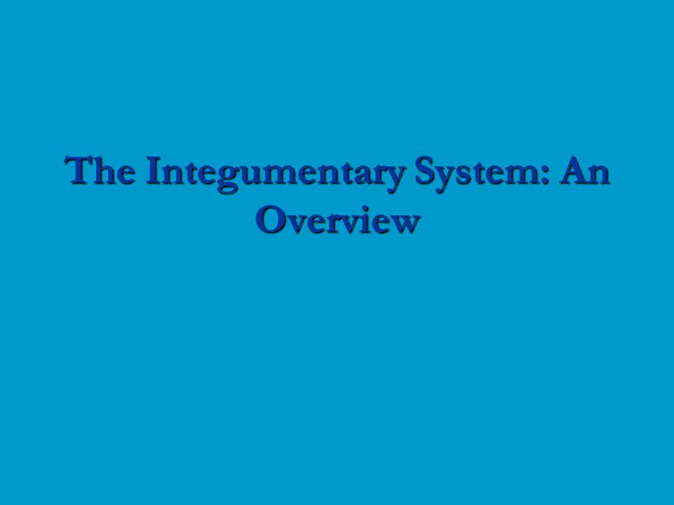 The Integumentary System: An Overview