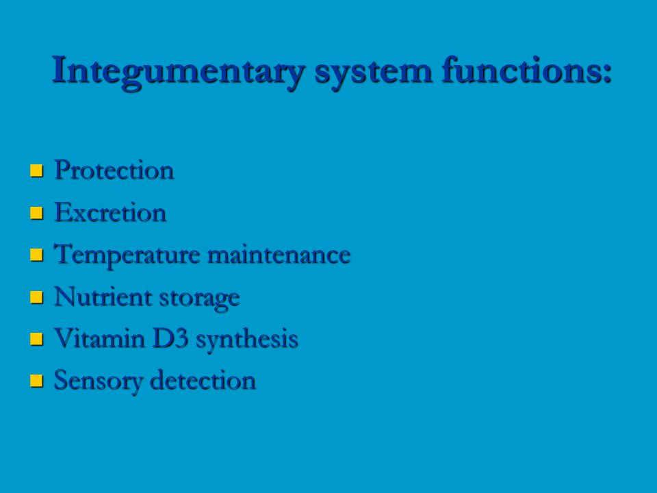 Protection Protection Excretion Excretion Temperature maintenance Temperature maintenance Nutrient storage Nutrient storage Vitamin D3 synthesis Vitamin D3 synthesis Sensory detection Sensory detection Integumentary system functions: