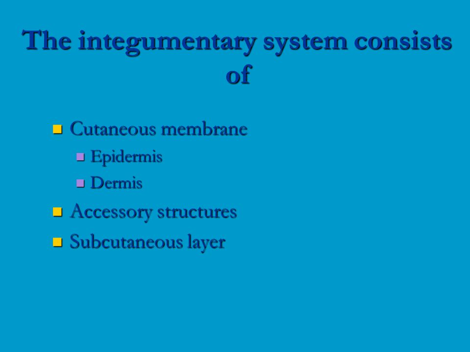 Cutaneous membrane Cutaneous membrane Epidermis Epidermis Dermis Dermis Accessory structures Accessory structures Subcutaneous layer Subcutaneous layer The integumentary system consists of