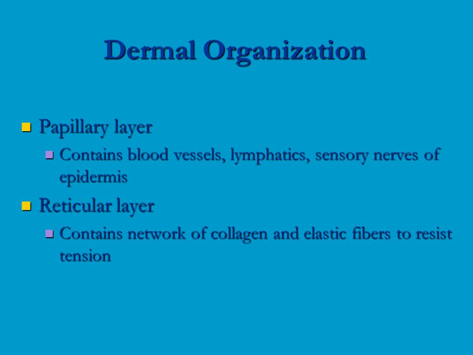 Papillary layer Papillary layer Contains blood vessels, lymphatics, sensory nerves of epidermis Contains blood vessels, lymphatics, sensory nerves of epidermis Reticular layer Reticular layer Contains network of collagen and elastic fibers to resist tension Contains network of collagen and elastic fibers to resist tension Dermal Organization
