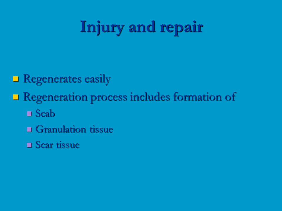 Regenerates easily Regenerates easily Regeneration process includes formation of Regeneration process includes formation of Scab Scab Granulation tissue Granulation tissue Scar tissue Scar tissue Injury and repair