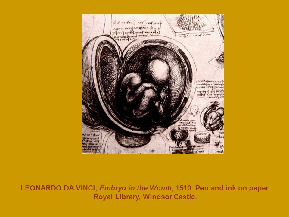 LEONARDO DA VINCI, Embryo in the Womb, Pen and ink on paper. Royal Library, Windsor Castle.