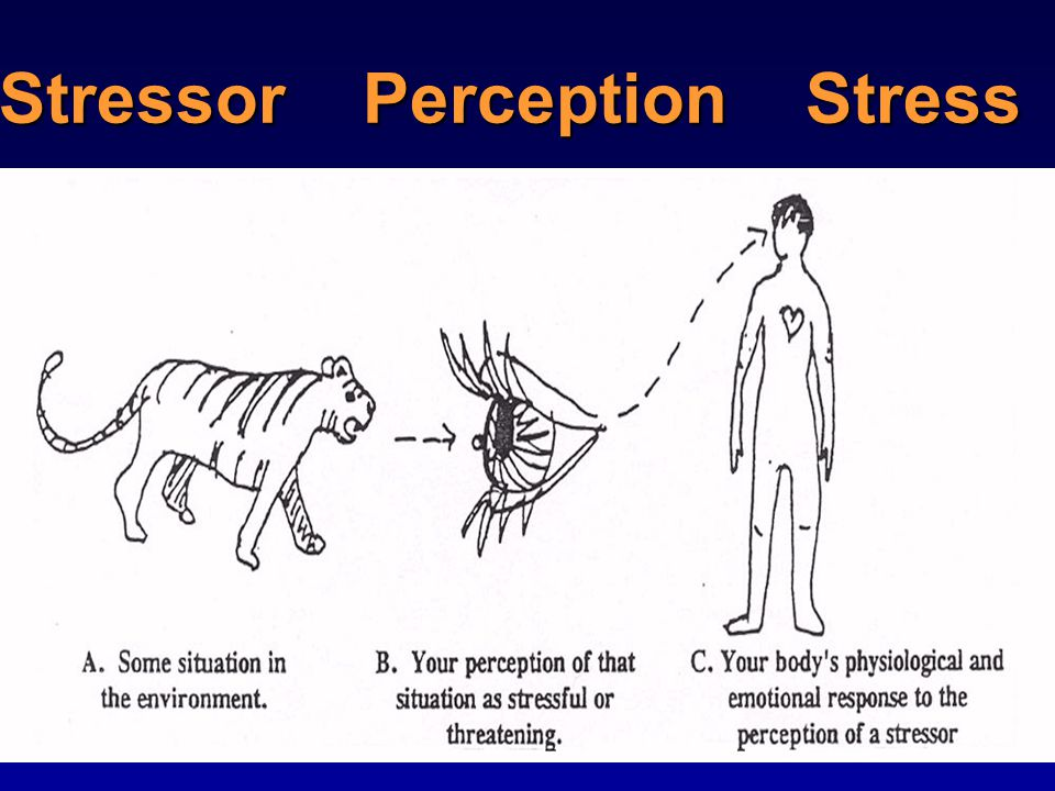 Stressor Perception Stress