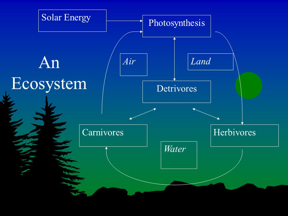 An Ecosystem Photosynthesis Solar Energy Detrivores HerbivoresCarnivores AirLand Water