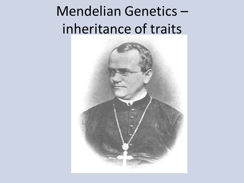 Mendelian Genetics – inheritance of traits