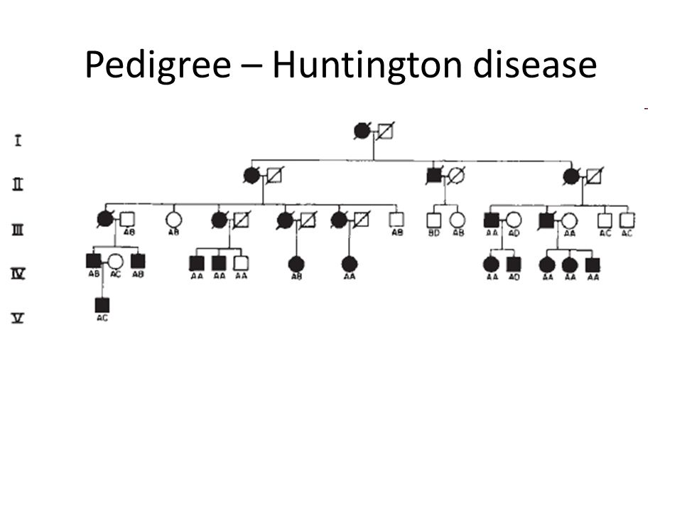Pedigree – Huntington disease