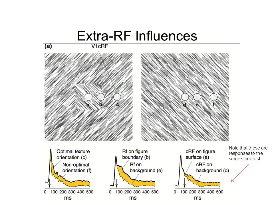 Extra-RF Influences Note that these are responses to the same stimulus!
