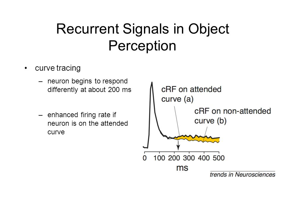 Recurrent Signals in Object Perception curve tracing –neuron begins to respond differently at about 200 ms –enhanced firing rate if neuron is on the attended curve