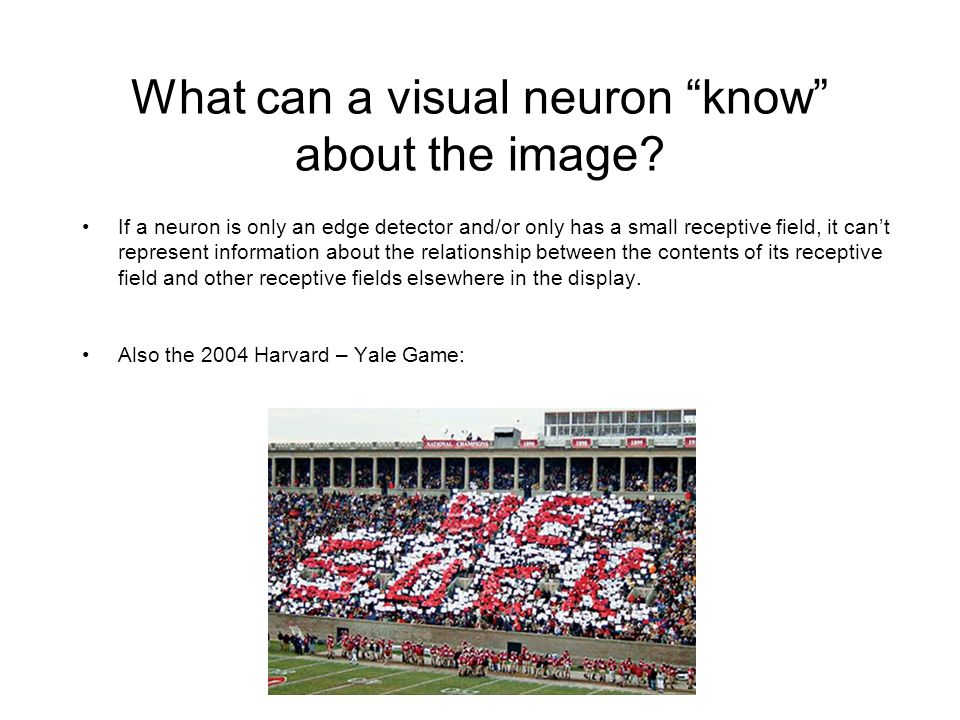 What can a visual neuron know about the image.