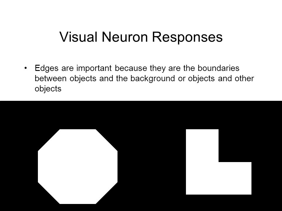 Visual Neuron Responses Edges are important because they are the boundaries between objects and the background or objects and other objects