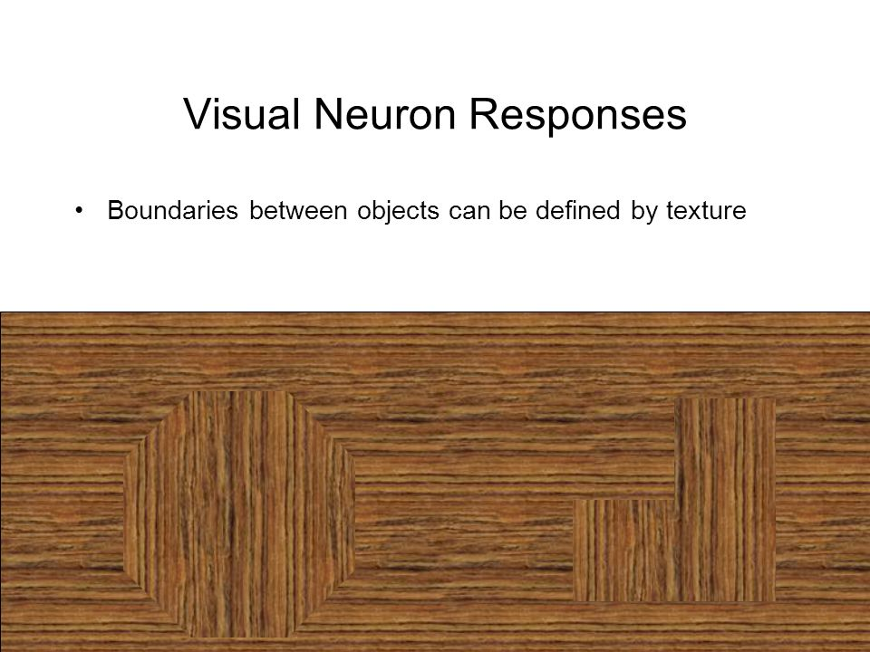 Visual Neuron Responses Boundaries between objects can be defined by texture