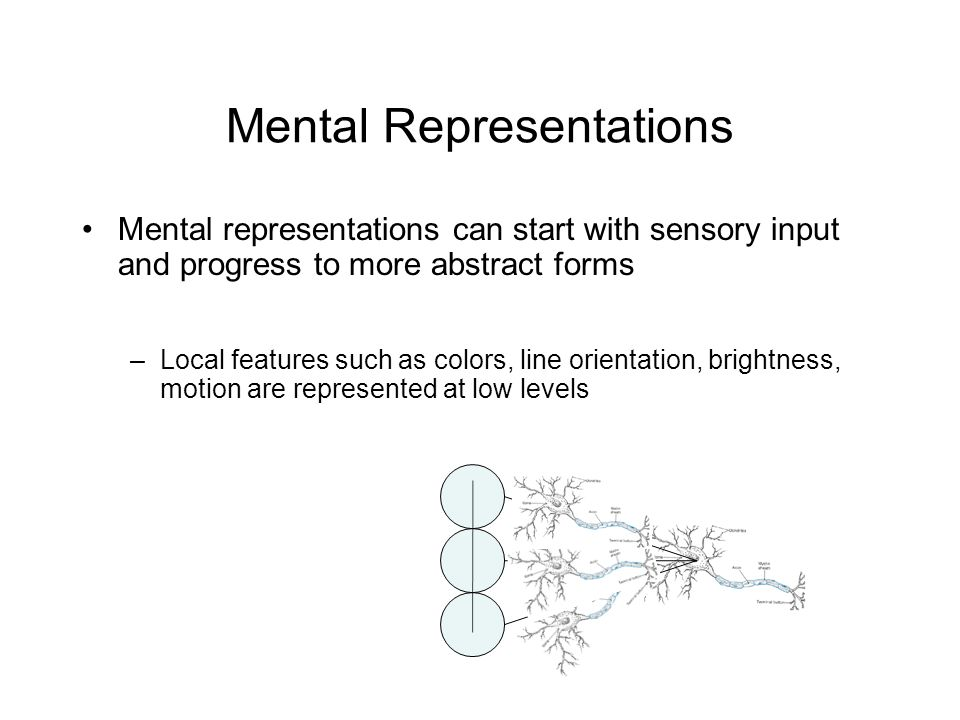 Mental Representations Mental representations can start with sensory input and progress to more abstract forms –Local features such as colors, line orientation, brightness, motion are represented at low levels