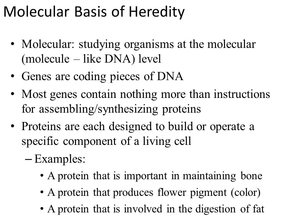 Molecular Basis of Heredity Molecular: studying organisms at the molecular (molecule – like DNA) level Genes are coding pieces of DNA Most genes contain nothing more than instructions for assembling/synthesizing proteins Proteins are each designed to build or operate a specific component of a living cell –Examples: A protein that is important in maintaining bone A protein that produces flower pigment (color) A protein that is involved in the digestion of fat