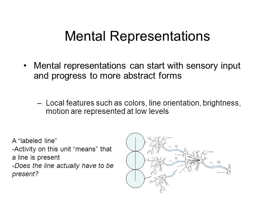 Mental Representations Mental representations can start with sensory input and progress to more abstract forms –Local features such as colors, line orientation, brightness, motion are represented at low levels A labeled line -Activity on this unit means that a line is present -Does the line actually have to be present
