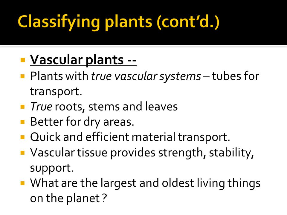  Vascular plants --  Plants with true vascular systems – tubes for transport.