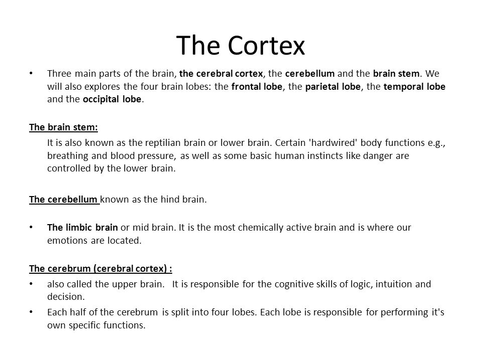 The Cortex Three main parts of the brain, the cerebral cortex, the cerebellum and the brain stem.