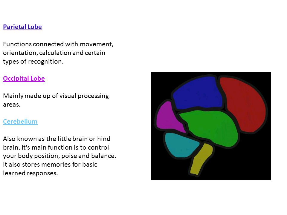 Parietal Lobe Functions connected with movement, orientation, calculation and certain types of recognition.