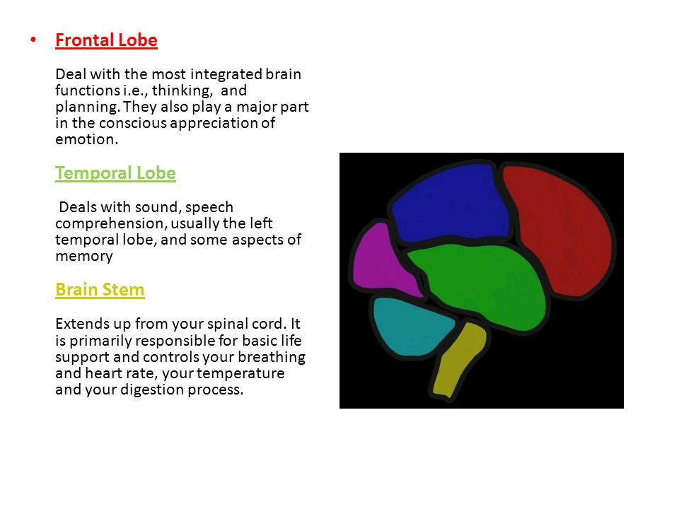Frontal Lobe Deal with the most integrated brain functions i.e., thinking, and planning.