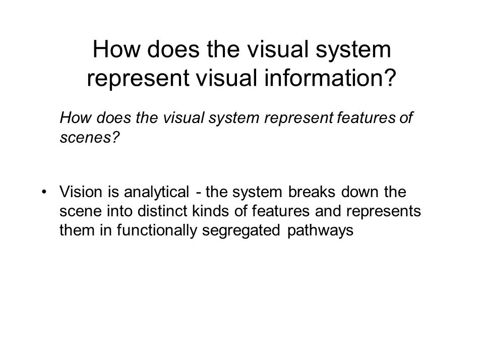 How does the visual system represent visual information.