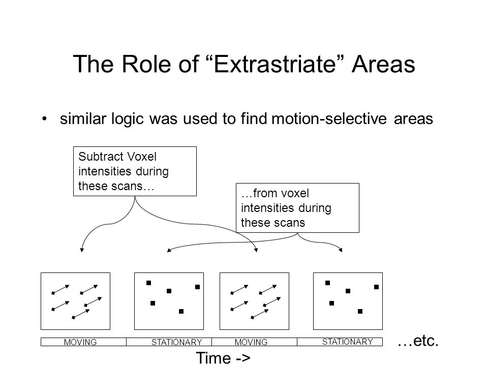The Role of Extrastriate Areas similar logic was used to find motion-selective areas Subtract Voxel intensities during these scans… …from voxel intensities during these scans …etc.