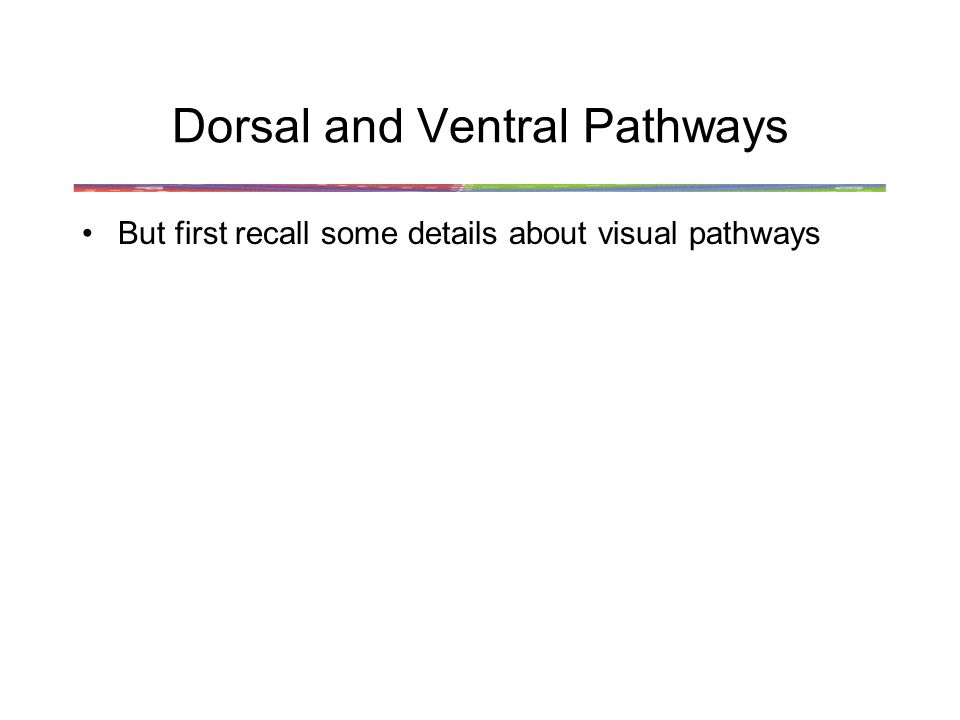 Dorsal and Ventral Pathways But first recall some details about visual pathways