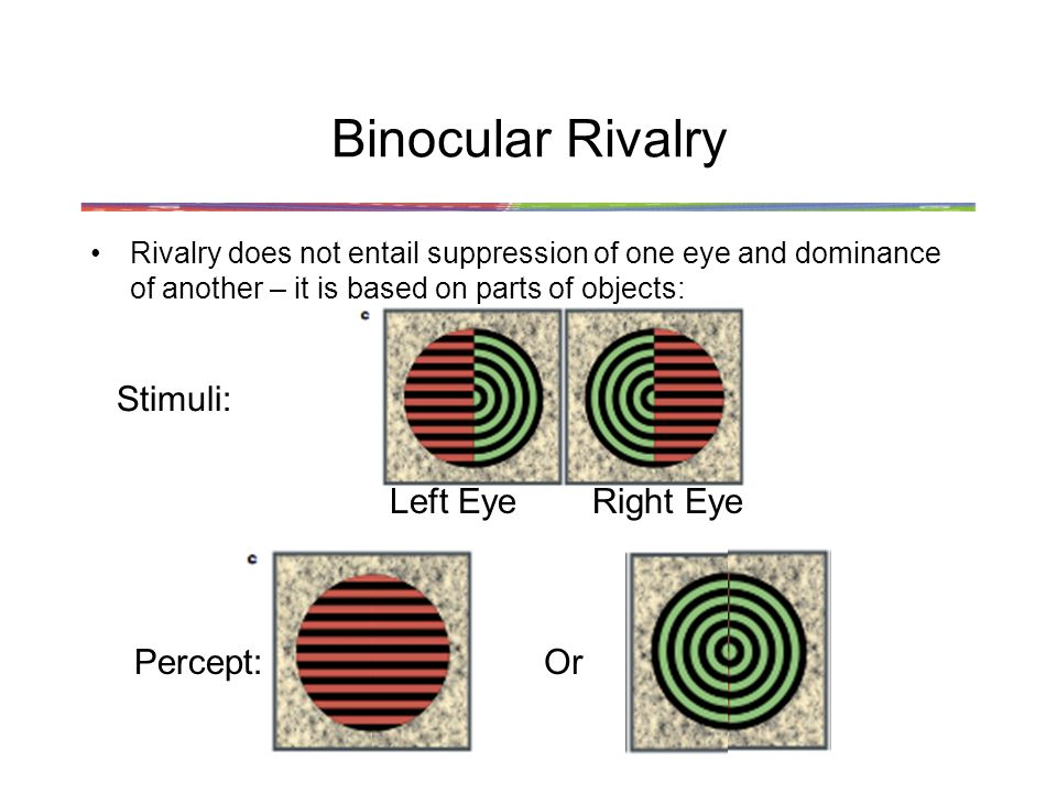 Binocular Rivalry Rivalry does not entail suppression of one eye and dominance of another – it is based on parts of objects: Left EyeRight Eye Stimuli: Percept:Or