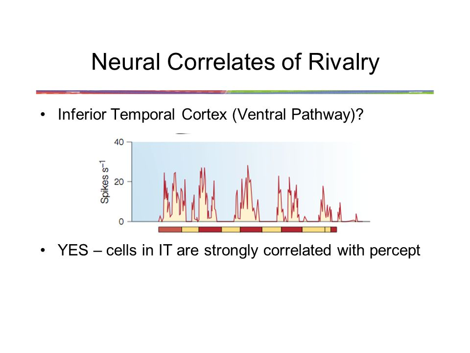 Neural Correlates of Rivalry Inferior Temporal Cortex (Ventral Pathway).