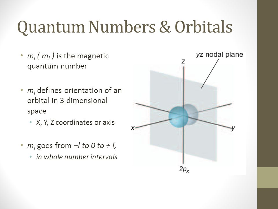 Quantum Numbers & Orbitals m l ( m l ) is the magnetic quantum number m l defines orientation of an orbital in 3 dimensional space X, Y, Z coordinates or axis m l goes from –l to 0 to + l, in whole number intervals