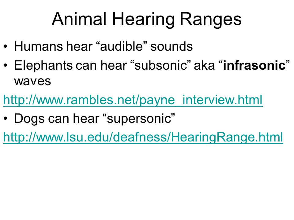 Animal Hearing Ranges Humans hear audible sounds Elephants can hear subsonic aka infrasonic waves   Dogs can hear supersonic