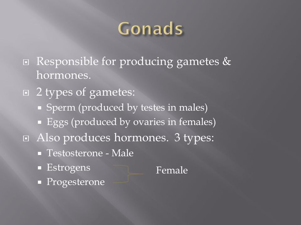  Responsible for producing gametes & hormones.