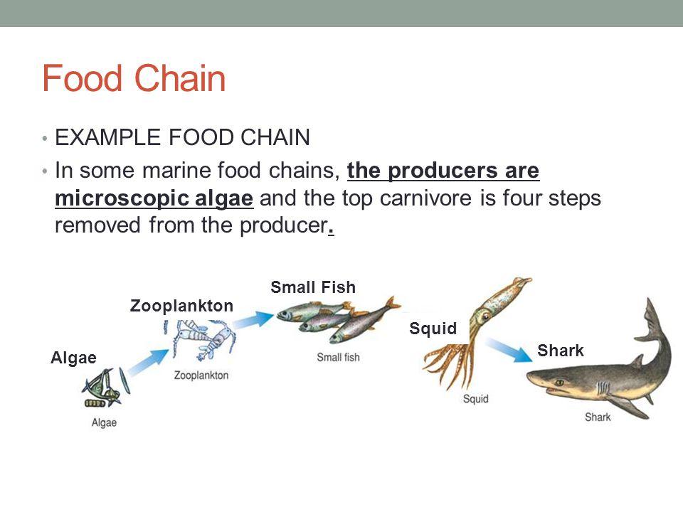 Bottom chain food marine — 15