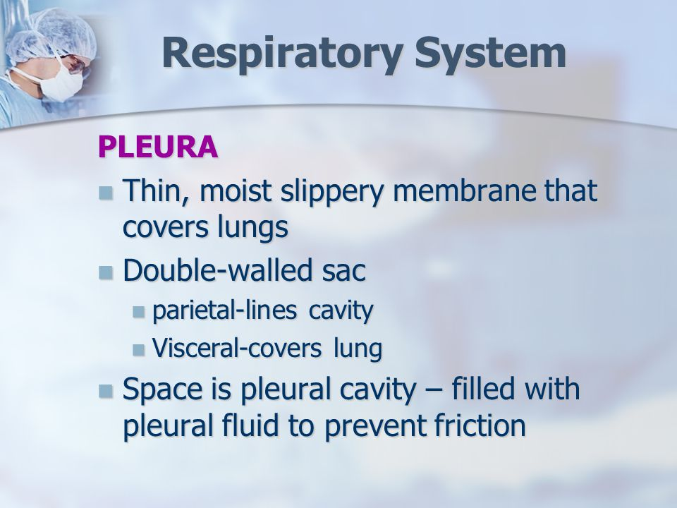 Respiratory System PLEURA Thin, moist slippery membrane that covers lungs Thin, moist slippery membrane that covers lungs Double-walled sac Double-walled sac parietal-lines cavity parietal-lines cavity Visceral-covers lung Visceral-covers lung Space is pleural cavity – filled with pleural fluid to prevent friction Space is pleural cavity – filled with pleural fluid to prevent friction