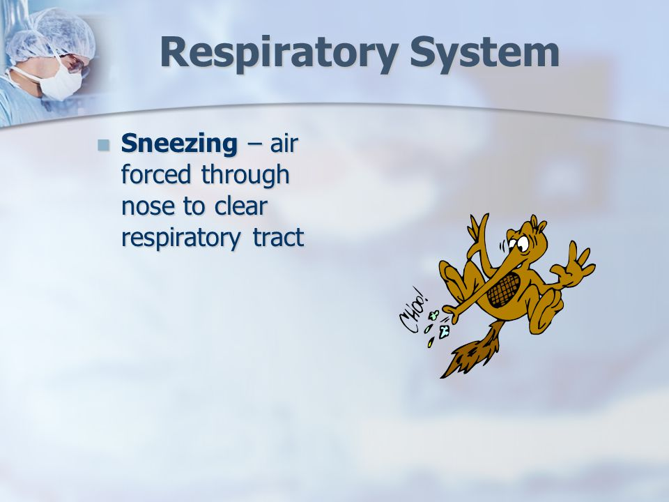 Respiratory System Sneezing – air forced through nose to clear respiratory tract Sneezing – air forced through nose to clear respiratory tract