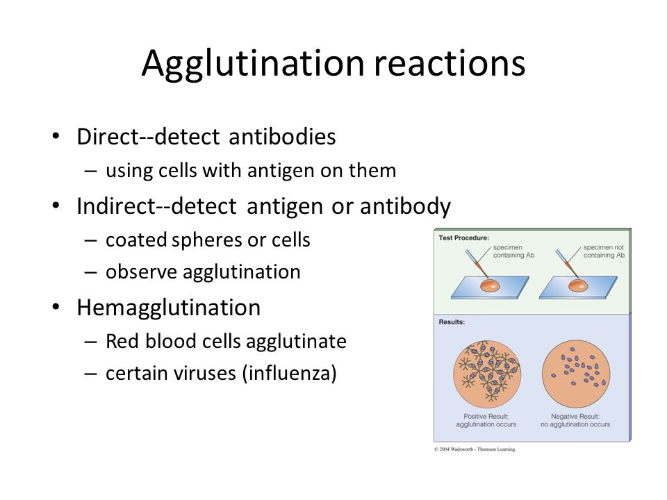 © 2004 Wadsworth – Thomson Learning Agglutination reactions Direct--detect antibodies – using cells with antigen on them Indirect--detect antigen or antibody – coated spheres or cells – observe agglutination Hemagglutination – Red blood cells agglutinate – certain viruses (influenza)