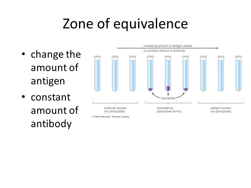 © 2004 Wadsworth – Thomson Learning Zone of equivalence change the amount of antigen constant amount of antibody